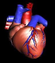 Vazospastična angina pectoris