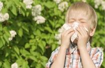 alergija je postala vesnik proleca